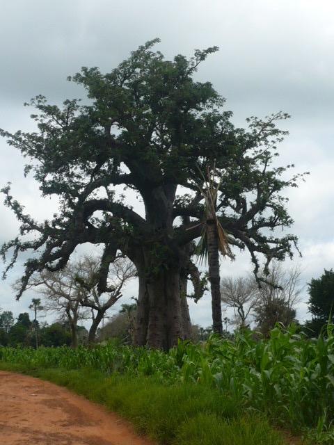 Portes ouvertes à l'Afrique